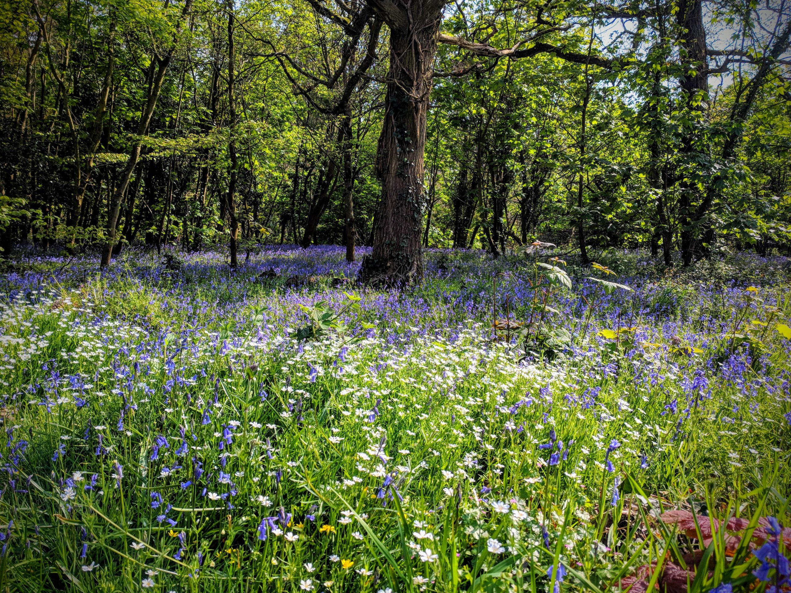 The Top 10 Bluebell Woods to Enjoy this Spring in Oxfordshire